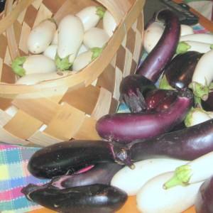 White and purple eggplants