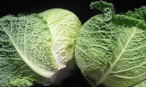 Heads of savoy cabbage