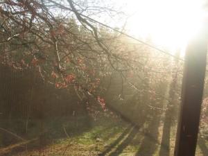 sunrising through trees