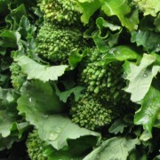 close-up of rapini or broccoli raab