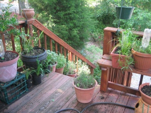 containers of herbs on deck and stairway