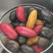 mixed color potatoes in colander