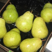 bartlett pears in case (from costco)