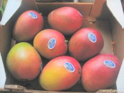 Photograph of 7 mangoes in case with PLU stickers