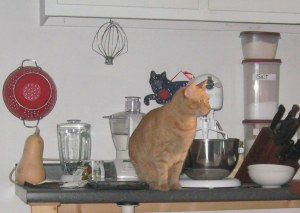 orange tabby on kitchen counter with mixer and knives