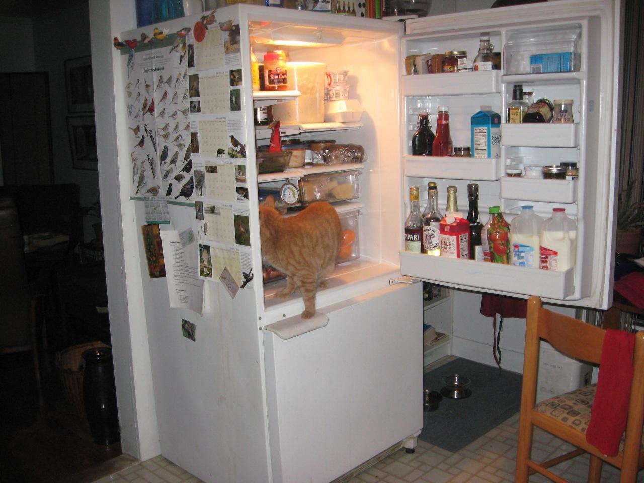 cat in refrigerator