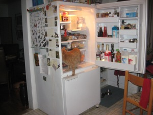 cat in refrigerator