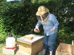 beekeeper me