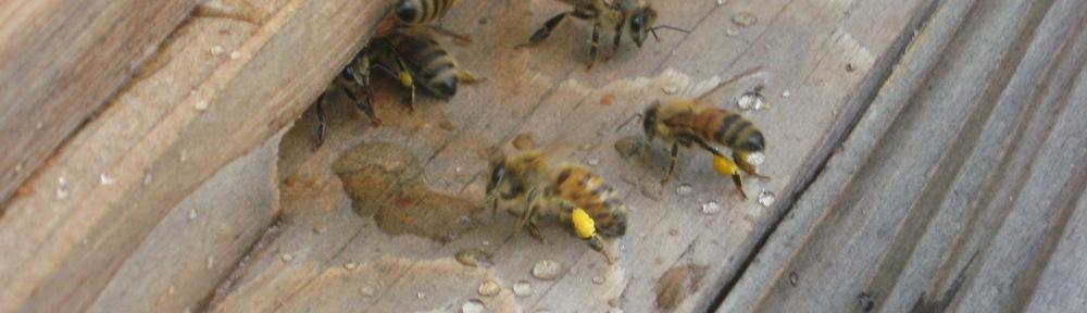 pollen-carrying bees