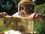 beekeeper holding Langstroth frame