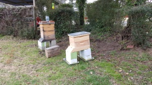 hive added
