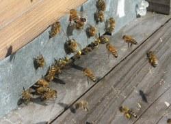 IMG_8902Feb hive