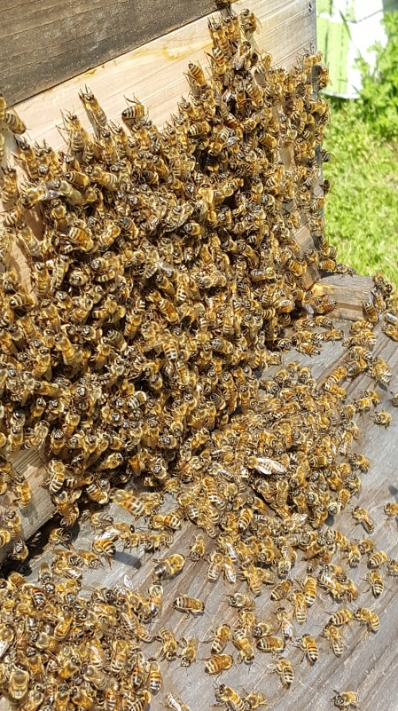 clusters of honeybees on the hive