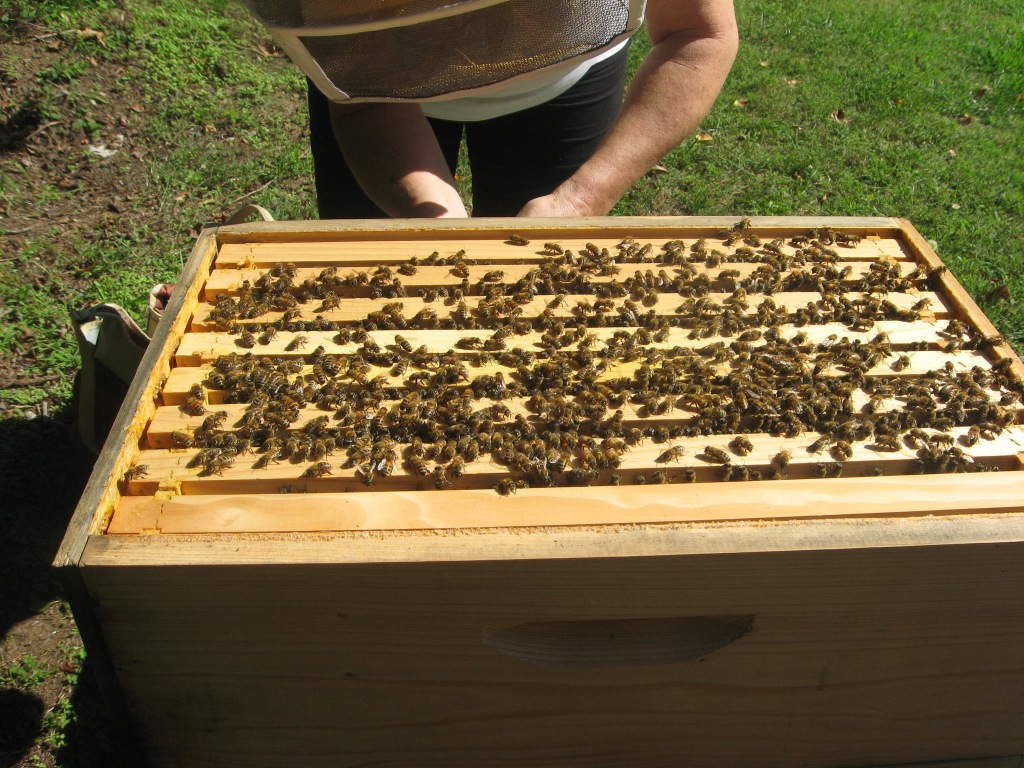 brood box of hive