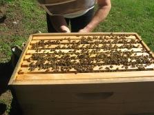 brood box of hive