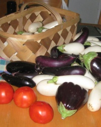 Summer Harvest IMG_4487